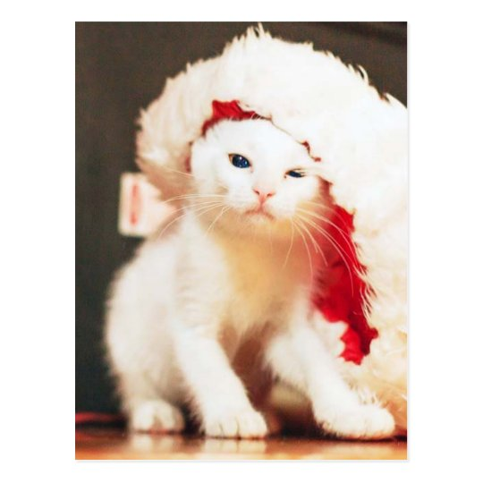 White Christmas Cat Postcard