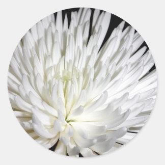 White Chrysanthemum Flower Mums Flowers Photo Classic Round Sticker
