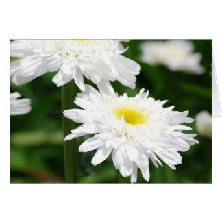White Chrysanthemums Greeting Cards