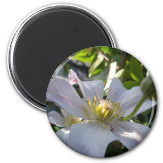 White Clematis II 2 Inch Round Magnet