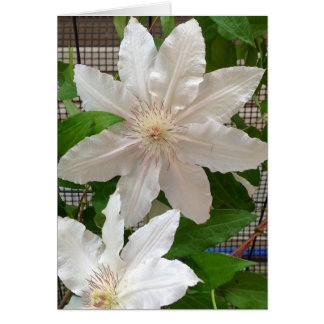 White Clematis Note Card