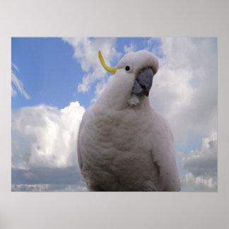 White Cockatoo Poster