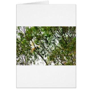 WHITE COCKATOO QUEENSLAND AUSTRALIA CARD