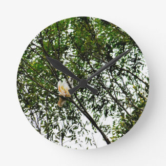 WHITE COCKATOO QUEENSLAND AUSTRALIA ROUND CLOCK