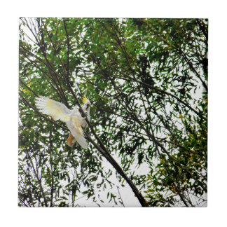WHITE COCKATOO QUEENSLAND AUSTRALIA TILE