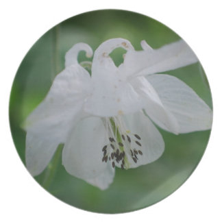 White Columbine Plate