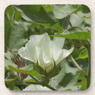 White Cotton Crop Blossom Coaster