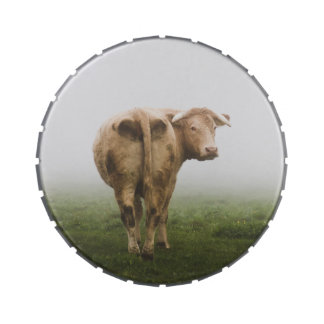 White Cow Bull looking Back in a Foggy Field