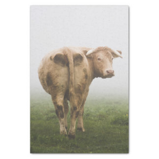 White Cow Bull looking Back in a Foggy Field Tissue Paper