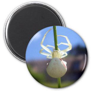 White Crab Spider Magnet