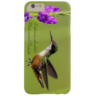 White-crested Coquette Barely There iPhone 6 Plus Case