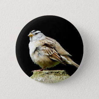 White Crowned Song Sparrow 2 Inch Round Button