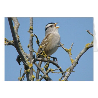 White crowned sparrow note card