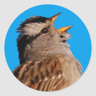 White-Crowned Sparrow Sings to the Sun Classic Round Sticker