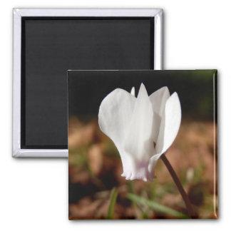White Cyclamen Magnet