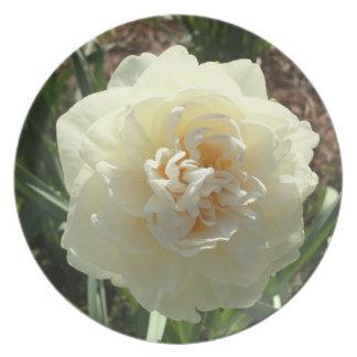 White Daffodil in Bloom Plate