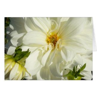 White Dahlia Card