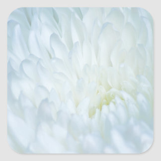 White Dahlia Petals Square Sticker