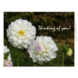 White dahlias card
