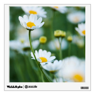 White Daisies in a Field - Customized Daisy Wall Sticker