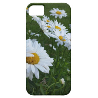 white daisies iPhone 5 covers