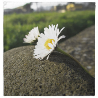 White daisies lying on the stone at sunset printed napkins
