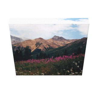 White Daisies Purple Fireweed Talkeetna Mtns. Canvas Prints