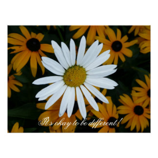 White Daisy and Blackeyed Susans Poster