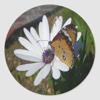 White Daisy and Butterfly Round Sticker