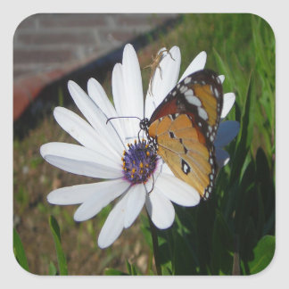 White Daisy and Butterfly Square Sticker