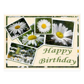 White Daisy Birthday Collage Postcard