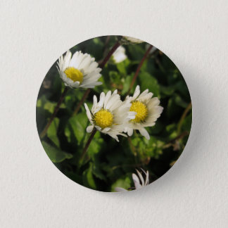 White daisy flowers on green background 2 inch round button