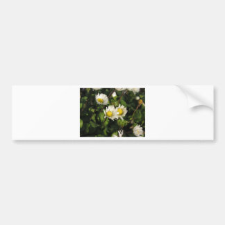 White daisy flowers on green background bumper sticker