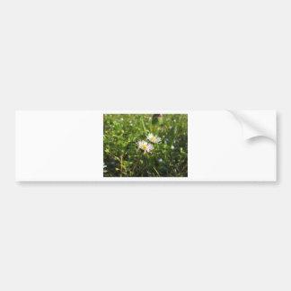 White daisy flowers on green background bumper sticker