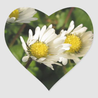 White daisy flowers on green background heart sticker