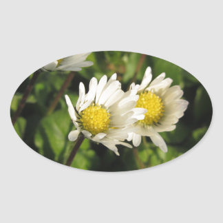 White daisy flowers on green background oval sticker
