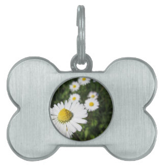 White daisy flowers on green background pet tag