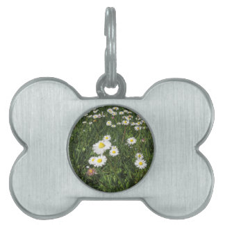 White daisy flowers on green background pet tags
