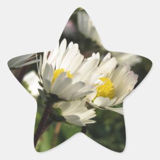 White daisy flowers on green background star sticker