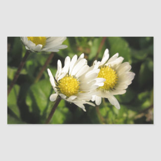 White daisy flowers on green background sticker