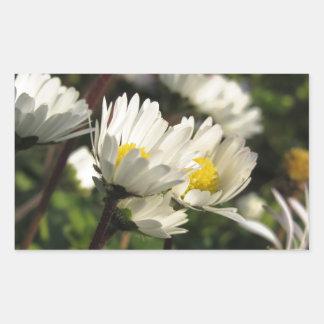 White daisy flowers on green background sticker