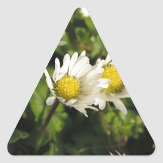 White daisy flowers on green background triangle sticker
