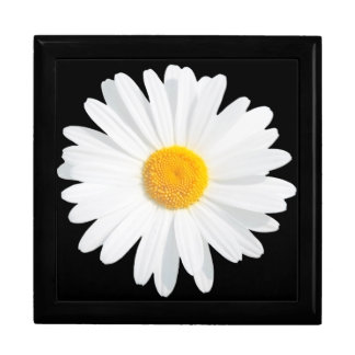 white daisy gift box