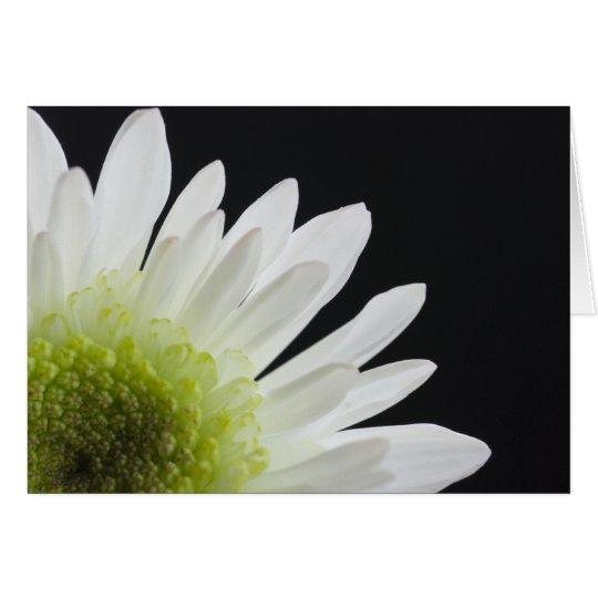White Daisy on Black Card