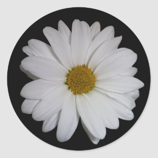 White Daisy Round Sticker