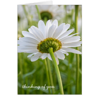 white daisy-thinking of you card