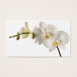 White Dendrobium Orchid Flower Spray Floral Blank Business Card