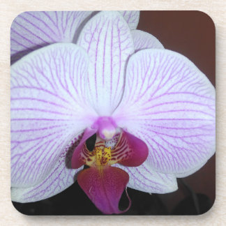 White Dendrobium Orchid With Purple Veins Drink Coasters