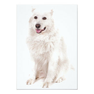"WHITE DOG DIGITAL REALISM PETS HAPPY LOGO CAUSES A 5"" X 7"" INVITATION CARD"