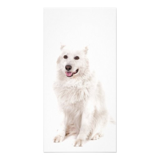 WHITE DOG DIGITAL REALISM PETS HAPPY LOGO CAUSES A PERSONALIZED PHOTO CARD